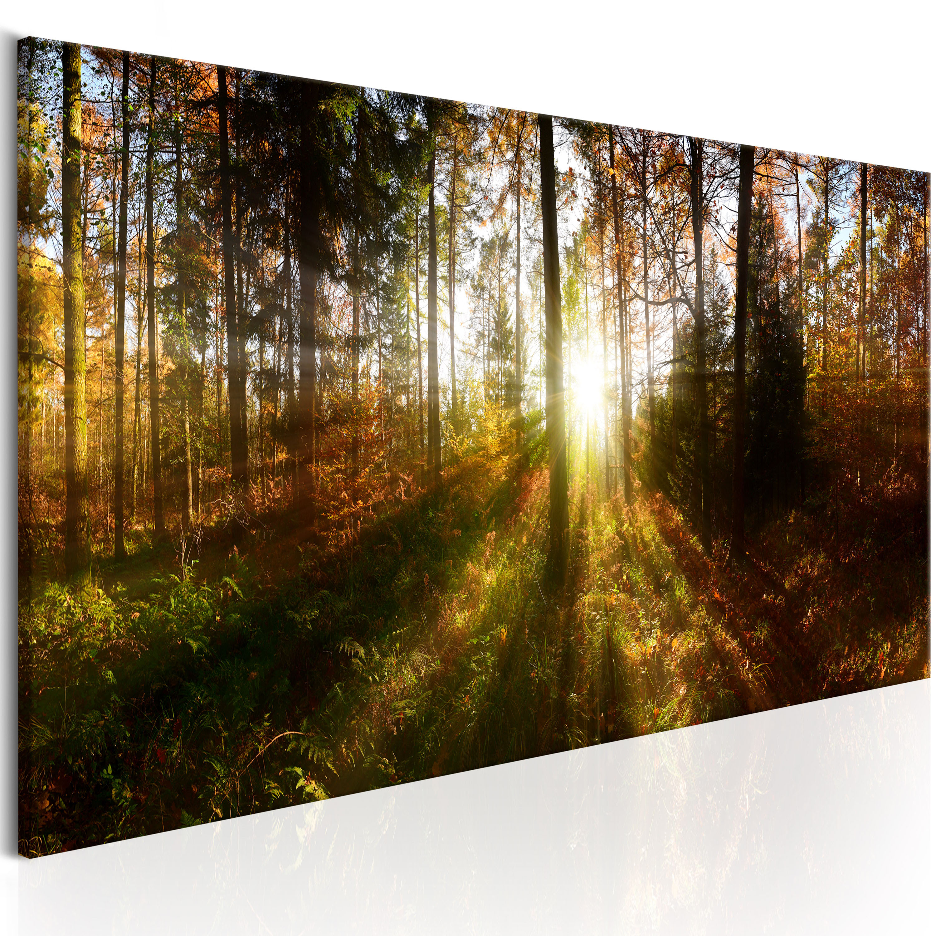 Obraz - Beautiful Forest 150x50