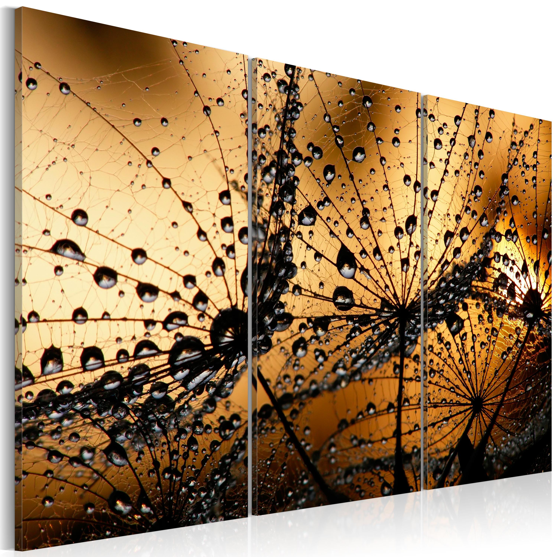 Obraz - Ranní rosa na pampeliškách 60x40