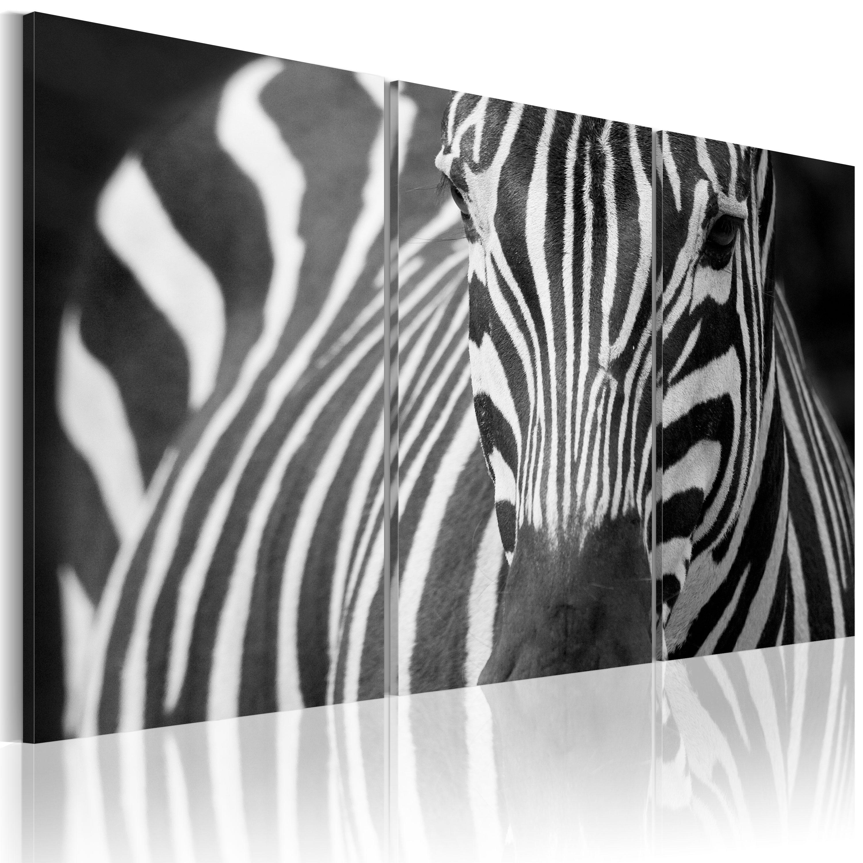 Obraz - Mrs. Zebra 120x80