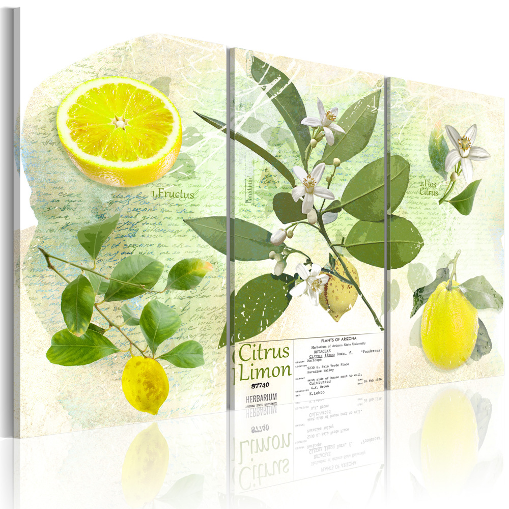 Obraz - Fruit: lemon 120x80