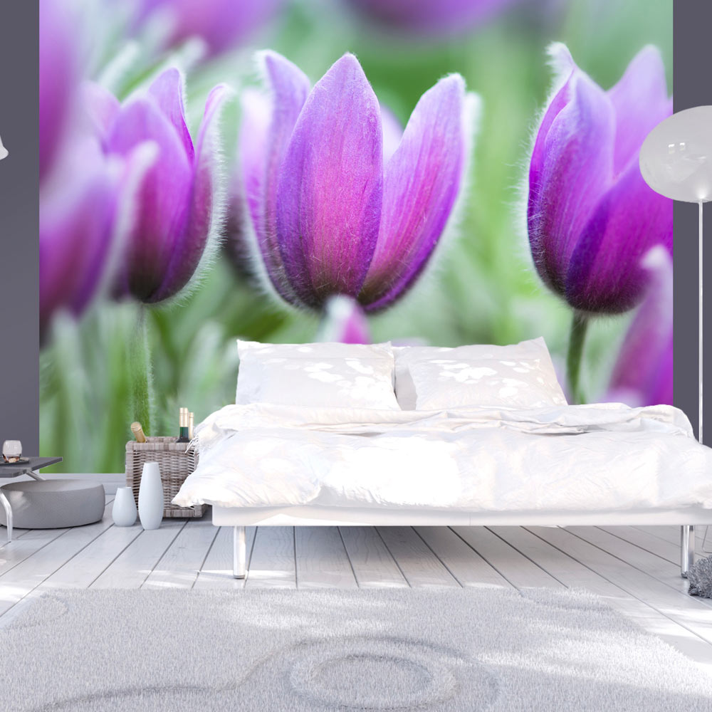 Fototapeta - Purple spring tulips 200x154